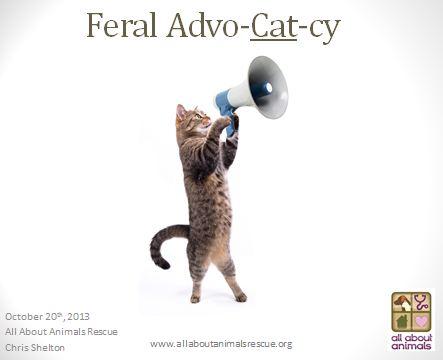 Feral Cat Advocacy