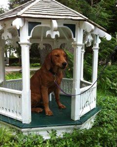 Richard Manoogian Dog